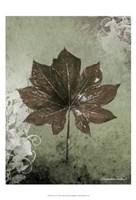 "Dry Leaf I by Patricia Pinto - 13"" x 19"""