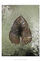 "Dry Leaf II by Patricia Pinto - 13"" x 19"", FulcrumGallery.com brand"