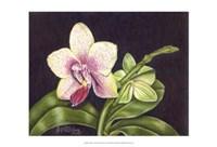 Vibrant Orchid II Fine Art Print