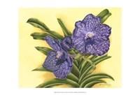 Vibrant Orchid III Fine Art Print