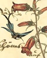 Small Hummingbird Reverie I - various sizes