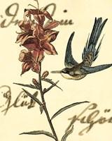 Small Hummingbird Reverie IV Fine Art Print