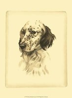 Printed Danchin Setter Framed Print