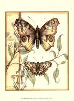 Mini Tandem Butterflies I Fine Art Print