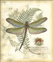 Mini Regal Dragonfly I Framed Print