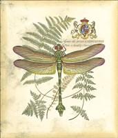 Mini Regal Dragonfly III Framed Print