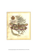 Mini Regal Dragonfly IV Framed Print