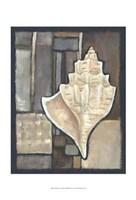 Abalone II Fine Art Print