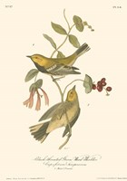 Black-Throated Green Wood Warbler Fine Art Print
