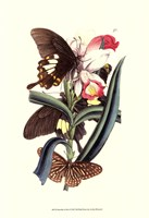 Butterflies and Flora I Fine Art Print