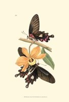 Butterflies and Flora II Fine Art Print