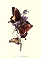 Butterflies and Flora III Fine Art Print