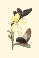 Butterflies and Flora IV Fine Art Print