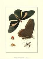 """Papillion III by John James Audubon - 10"""" x 13"""""""
