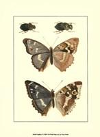 "Papillion IV by John James Audubon - 10"" x 13"""