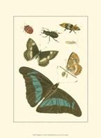 Papillion V Framed Print