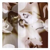 Cymbidium Orchid II Fine Art Print