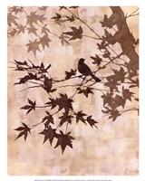 Maple Chorus II Framed Print