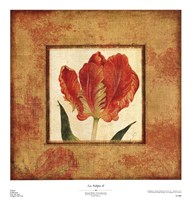 "Les Tulipes II by Eleanor Revere Weedon - 20"" x 21"""