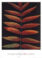 "Staghorn Sumac II by Beckett Griffith - 20"" x 28"""