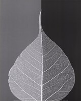 "Crystalline Form II (Mini) by Dellinger Gil - 11"" x 14"""