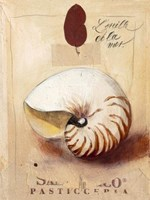 """L`Oreille De La Mer by John James Audubon - 12"""" x 16"""""""