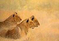"""Panthera Leo by John James Audubon - 40"""" x 28"""""""