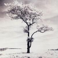 "Lone Tree # 3, Peak District, England by John James Audubon - 20"" x 20"""