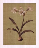 Botanica Verde I Framed Print