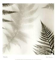 Ferns No. 2 Framed Print