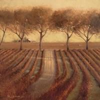 Vintage Sunlit Vineyard