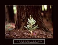 "Determination – Little Pine by John James Audubon - 28"" x 22"""