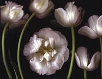 """Tulip Garden by Pip Bloomfield - 28"""" x 22"""""""