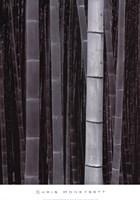 """Bamboo #4, Kyoto by Chris Honeysett - 18"""" x 26"""""""