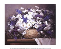 Daisies and Delphiniums Fine Art Print