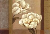 Tulip Duet - Cs Fine Art Print