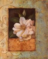 """Antique Rose II - Special by Jillian Jeffrey - 16"""" x 20"""""""