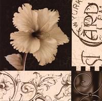 Hibiscus Blossom I Fine Art Print