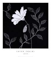 Levisia Framed Print