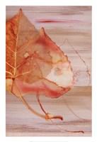 Autumn Radiance I Fine Art Print