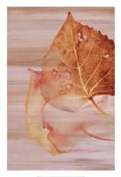 Autumn Radiance II Fine Art Print