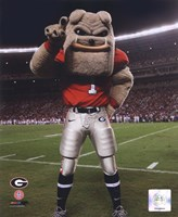 The Univserity of Georgia Bulldogs Mascot 2007 Fine Art Print