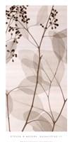 Eucalyptus III Framed Print