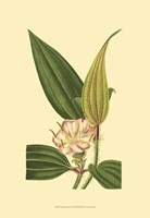 Tropical Ambrosia I Fine Art Print