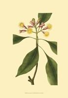 Tropical Ambrosia IV Fine Art Print