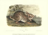 Swamp Hare Fine Art Print