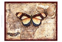 Poetic Butterfly I Framed Print