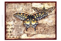 Poetic Butterfly II Framed Print