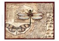 Poetic Dragonfly I Framed Print
