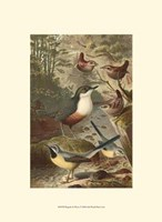 """Wagtails and Wrens by John James Audubon - 10"""" x 13"""", FulcrumGallery.com brand"""